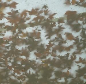 Herbststimmung in Konstanz